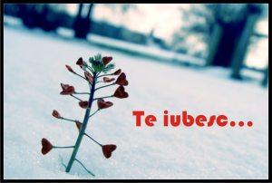 poze_TE-IUBESC_08